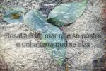 Rosalia por Alfredo Ferreiro e Tono Galan